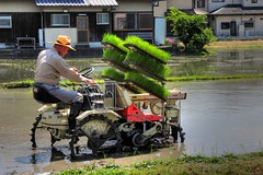 rice planting season-CIMG5877_78_79_80_81 (pinboke_planet) Tags: june japan honda casio ricefield 2008 hdr riceplanting kakogawa photomatix exf1