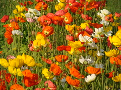 Di tutti i colori - Full of colours (Cristina 63) Tags: flowers italy parco nature torino italia colours natura explore piemonte fiori 1001nights turin colori piedmont naturelovers tesoriera omot diamondclassphotographer flickrdiamond visitpiedmont incrediblenature raccontarelanatura goldstaraward paisajesdepueblosycampos wonderfulworldofflowers peachofashot bestflickrphotography oltusfotos flowerstowers