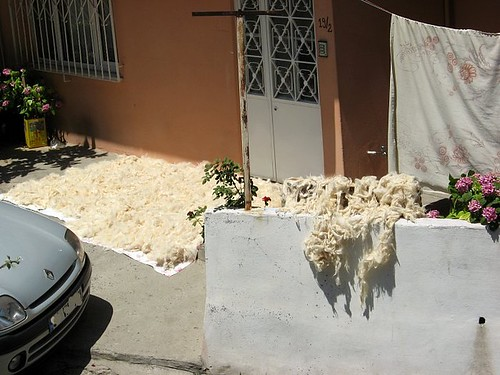 sheep fleece, sun drying, turkish tradition