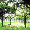 wan wan ! what can i do here ?? / 綠野仙蹤 (YENTHEN) Tags: park light dog tree taiwan taipei 台灣 台北 ricoh doggie 公園 台北市 grd 新生公園 dogie ricohgrd yenthen