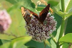 Twins (TallCJ) Tags: flower macro canon virginia nationalpark butterflies loveit blooming skylinedrive courtneyjohnson shenandoahnationalpark rebelxsi