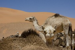 08 Campamento Saharaui Dajla