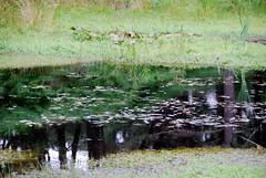 The Blue Pool (HerryLawford) Tags: dorset wareham bluepool