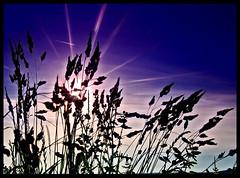 Wasted Sunsets (Jealously Blue) Tags: blue sunset sun silhouette star purple sheffield hills bole