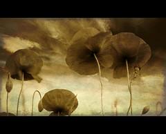 War of the Worlds (Martyn Starkey) Tags: chapeau firstquality memoriesbook photoexel