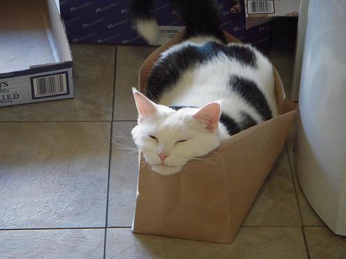 K-Man Has a Bag