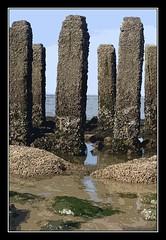 Oostkapelle (Eddy Westveer) Tags: beach strand photoshop fkk cs3 palen nudistbeach oostkapelle naakstrand paalhoofden
