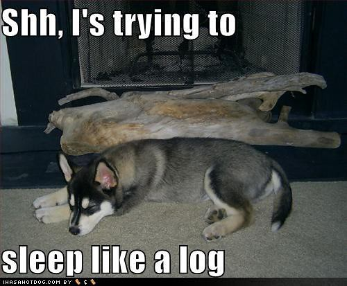 funny-dog-pictures-dog-tries-to-sleep-like-a-log 2011