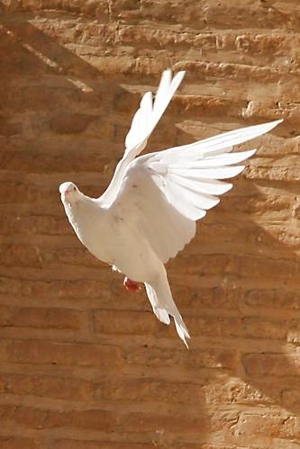 La paix - arrêtez d'être gentil soyez vrai