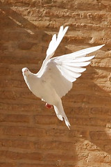 Curious look (hapal) Tags: white bird wall canon eos fly wings peace iran dove bricks creativecommons pax iranian shalom  paix   bastam  40d   colourartaward hapal  hamidnajafi upcoming:event=916887