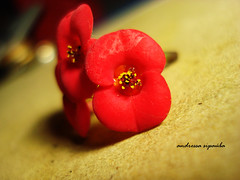 Flower - Explore! (Andressa Sipaba (;) Tags: red flower flor explore vermelha florzinha andressasipaba