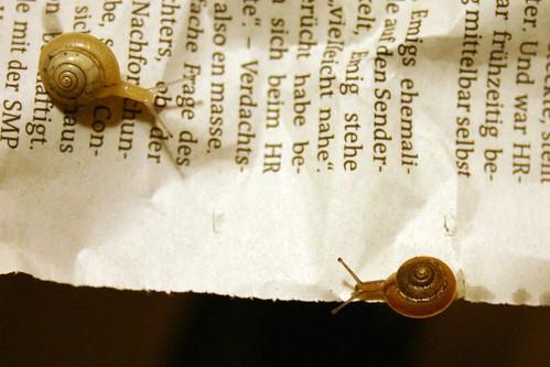 Merry lettuce snails VIII