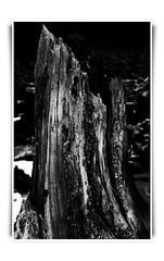 McCullough Gulch (JeezoPeezo) Tags: tree colorado breckenridge mountians mcculloughgulch coloradomountiansbreckenridgetreemcculloughgulch jeezopeezo