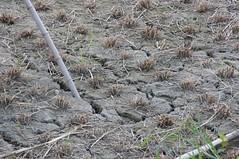 蛇紋岩質の土壌