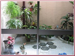 A peep into our courtyard garden from inside our dining area, looking out through the glass doors