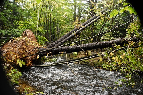 Trees Down at the Brook