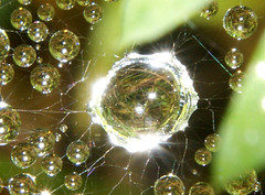 Flash Reflector (binaryCoco) Tags: light reflection green nature water licht drops wasser crystal web natur hannover dew tau grn reflektion tropfen kristall laatzen taunetz