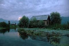 In Color (hpk) Tags: morning india lake hpk vikram kashmir srinagar jk jammukashmir kashmirphotos jammukahsmir kashmirimages kashmirpeople