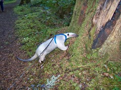 Some more tree sniffing