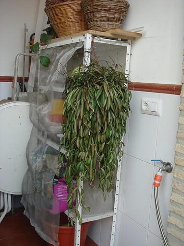 Mis plantas y sus flores 2955724206_a40fcbea9b