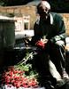 (matiya firoozfar) Tags: lighting shadow red flower work canon dark persian iran persia iranian ایران isfahan اصفهان گل matiya matiyafiroozfar اصفهانی ماتیا فیروزفر firoozfar ماتیافیروزفر