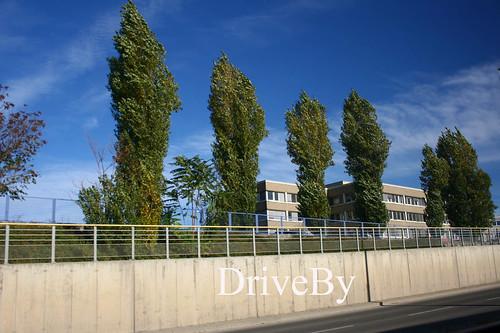 trees driveby