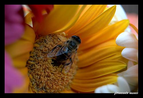 3ª Feira de Flores - IVOTI