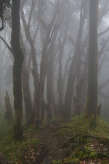 Foggy Rhododendron Forest (Andreas' Photos) Tags: nepal chomrong poonhill dhaulagiri annapurnasouth macchapucchare ghorapani hinchuli
