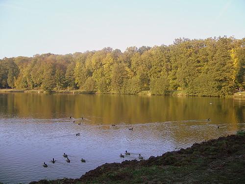 Lago nel bosco