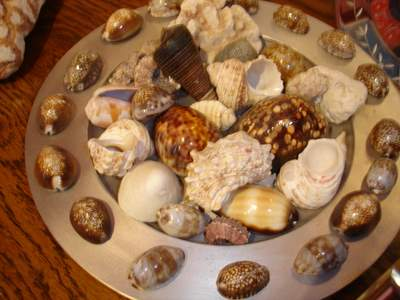 shells from the Pacific