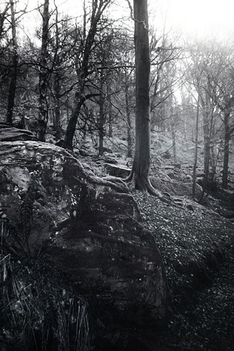 Photography - Broken Shade by Nicholas M Vivian