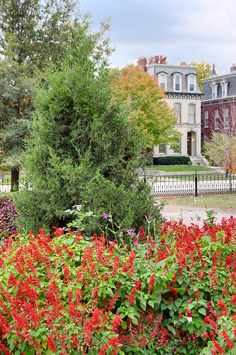 Lafayette Square Neighborhood, in Saint Louis, Missouri, USA - Lafayette Park - red flowers