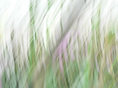 blurry orchids to begin with (kiwipilu) Tags: orchid green blurry flou orchide