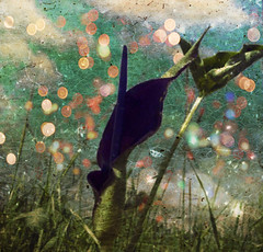 Luminette (batabidd) Tags: winter green nature grass clouds photoshop manipulated vintage thailand asia artistic bangkok digitalart creative surreal digitalpainting aubergine dreamy aracea imaginary cala blurb luismiranda inflorescence thepottingshed memoriesbook arumpalaestinum aracae theawardtree hourofthesoul graphicmaster batabidd sparklights flowerarum