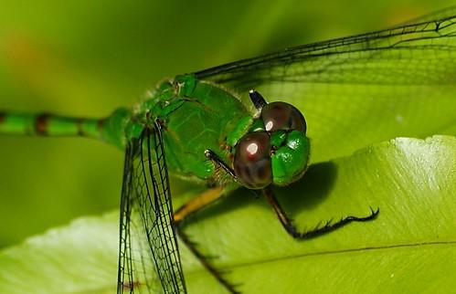 Green as Green