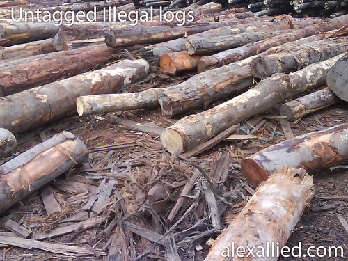 Illegal logs