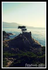 The Lone Cypress (Februum) Tags: california sea tree monterey pacific saturday lonecypress 17miledrive mywinners