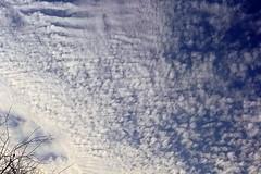 sky is canvas (TARIQ HAMEED SULEMANI) Tags: flowers pakistan tree bird nature gardens clouds purple tariq concordians sulemani