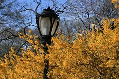 Lamp post in Central park (Frank Fullard) Tags: street trees newyork flower color lamp centralpark manhattan frankfullard