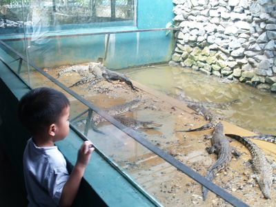Julian looking at crocodiles