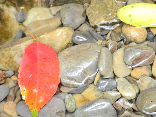 Pebbles and Leaf  (by Queenie)