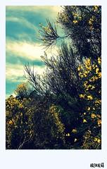 POSTAL 1 (arenal68) Tags: life flowers blue trees sky paisajes naturaleza color colour verde green primavera nature argentina argentine yellow azul de photography la spring energy arboles postcard tranquility sierra vida cielo postal breathe pampa tandil turquesa