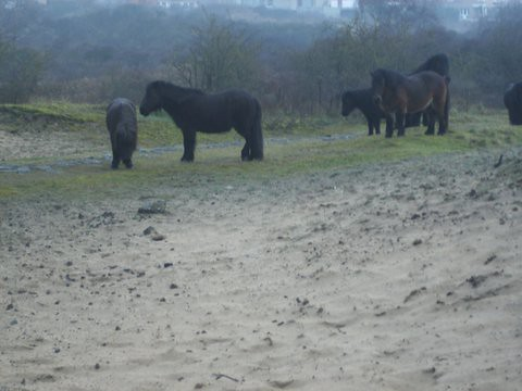 Oostduinkerke 4 maart 2014 - 2 wandelroutes 013
