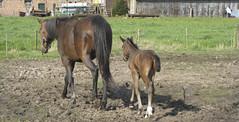Ask DNA (askthepixel) Tags: family horse countryside famiglia young mother son campagna erba mamma terra cavallo madre figlio puledro askthepixel