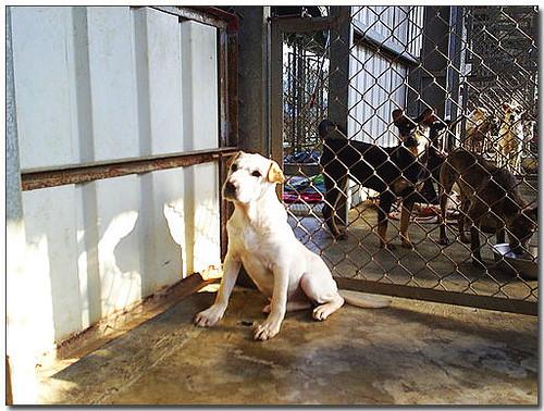 2008-06-05-『需要幫助中途助養認養募糧』高雄阿蓮石小姐114忠狗~剩...半個月的飼料~請大家再度幫忙!