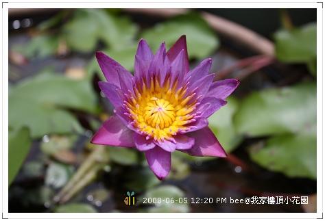 20080605@我家樓頂的小花園 (7)
