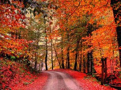 red  road (NURAY YUZBASI) Tags: road red autum bolu yedigoller sonydscw30 mywinners colorphotoaward goldenvisions