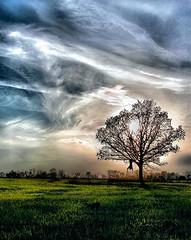 HDR - Tree