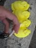 IMG_1457 (nevereatenadonut) Tags: smoking tryingtobecool gatewaydrug