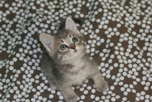 cute kitten looking up cat pic